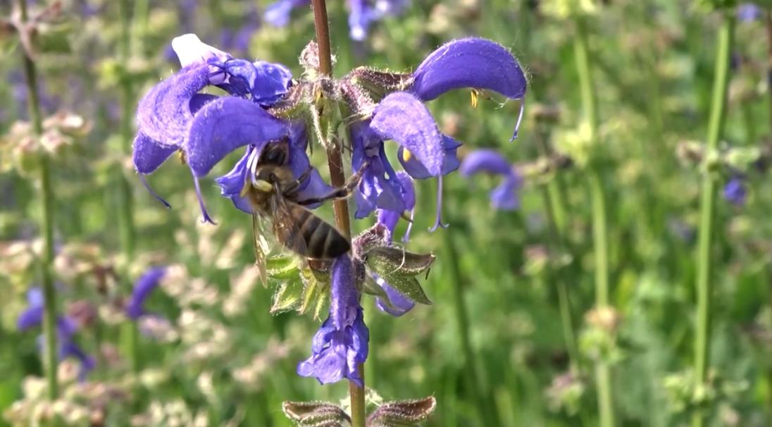 Von Gemüse, Bienentänzen und Walderdbeeren