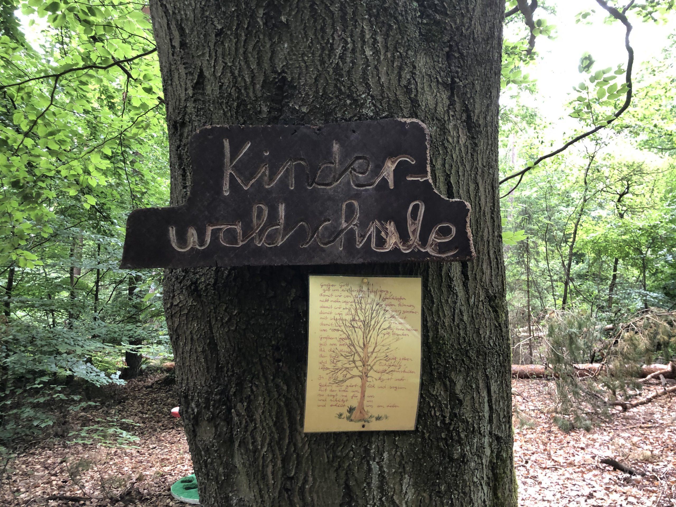 Wenn Schulkinder zu Waldkindern werden